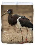 Abdim Stork Walks Right-to-left Across Muddy Ground Duvet Cover