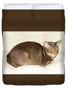Abyssinian Cat On Chair Pillow, Symbol Of Comfort Duvet Cover