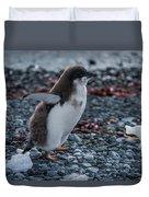 Adelie Penguin Chick Running Along Stony Beach Duvet Cover