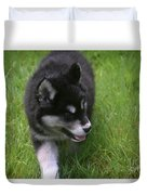 Adorable Fluffy Alusky Puppy Walking In Tall Grass Duvet Cover