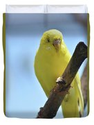 Adorable Yellow Budgie Parakeet Bird Close Up Duvet Cover