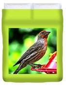 Adult Male House Finch Duvet Cover
