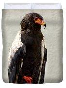 African Eagle-bateleur II Duvet Cover
