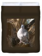 African Collared Dove 3 Duvet Cover