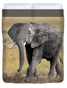 African Elephant Happy And Free Duvet Cover