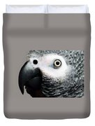 African Gray Parrot Art - Softy Duvet Cover