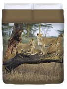 African Lion Panthera Leo Family Duvet Cover by Konrad Wothe