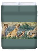 African Lion Panthera Leo Family Duvet Cover