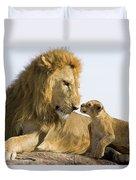 African Lion Panthera Leo Seven Duvet Cover