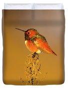 Allen's Hummingbird II Duvet Cover