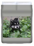 Alusky Pup Peaking Out Of Green Foliage Duvet Cover