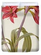 Amaryllis Brasiliensis Duvet Cover