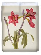 Amaryllis Brasiliensis Duvet Cover by Pierre Redoute