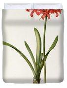 Amaryllis Curvifolia Duvet Cover