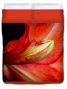 Amaryllis Flower About To Bloom Duvet Cover