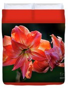 Amaryllis In February 5472 Duvet Cover