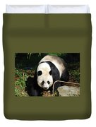 Amazing Sweet Chinese Giant Panda Bear Walking Around Duvet Cover