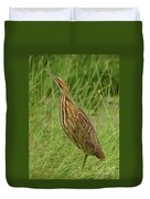 American Bittern Looking Up Duvet Cover