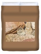 American Pika Focuses On The Camera Duvet Cover