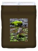 American Robin In Garden Springs Creek Duvet Cover