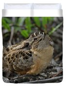American Woodcock At Rest Duvet Cover