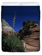 An Agave Plant In The Desert Landscapt Duvet Cover