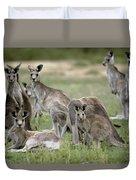 An Alert Mob Of Eastern Grey Kangaroos Duvet Cover
