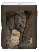 An Elephant Calf Finds Shelter Amid Duvet Cover