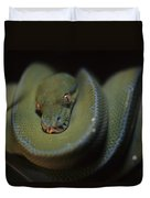 An Immature Green Tree Python Curled Duvet Cover