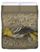 An Orchard Oriole On A Gravel Road Duvet Cover