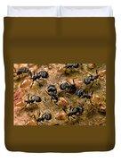 Ant Crematogaster Sp Group Duvet Cover