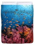 Anthias Fish And Soft Corals, Fiji Duvet Cover