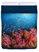 Anthias Fish And Soft Corals, Fiji Duvet Cover