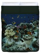 Anthias Fish, Anemonefish And Basslets Duvet Cover