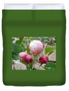 Apple Blossom Buds Art Prints Spring Baslee Troutman Duvet Cover