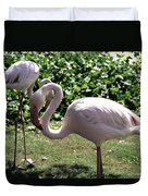 Arizona Flamingos Duvet Cover