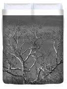 Arizona Sycamore Tree Filtered 022714 Duvet Cover