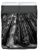 Armstrong National Park Redwoods Filtered Sun Black And White Duvet Cover
