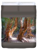 Arrayanes Grove On Trail In Arrayanes National Park Near Bariloche-argentina Duvet Cover