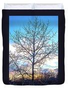 Aspen Tree At Sunset Duvet Cover