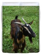 Attractive Goat Standing In A Grass Field On A Farm Duvet Cover