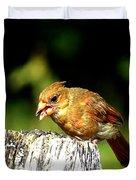 Baby Cardinal Duvet Cover