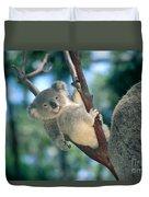 Baby Koala Bear Duvet Cover