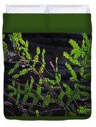 Back-lit Conifer Branches Duvet Cover