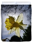 Backlit Daffodil Duvet Cover