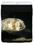 Balloonfish Profile Puffer Fish, Diodon Duvet Cover