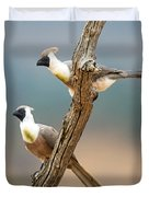 Bare-faced Go-away-birds Corythaixoides Duvet Cover