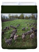 Barred Plymouth Rock Chickens Free Duvet Cover
