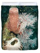 Barrell Sponges And Sea Fans Duvet Cover