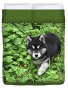 Beautiful Alusky Puppy Peaking Out Of Green Foliage Duvet Cover
